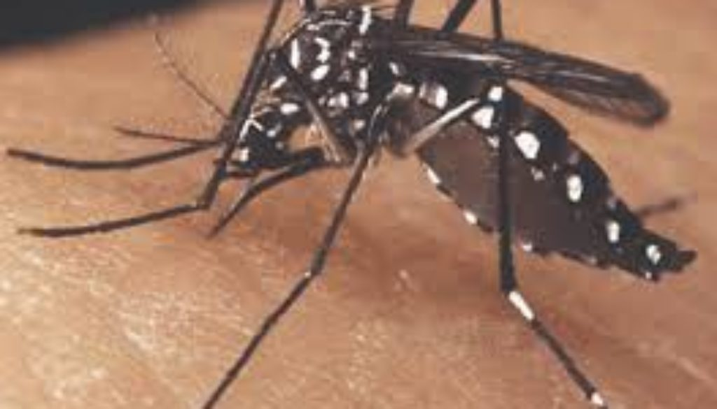 ARPHA-urges-the-region-to-deal-seriously-to-eradicate-mosquitoes.jpg
