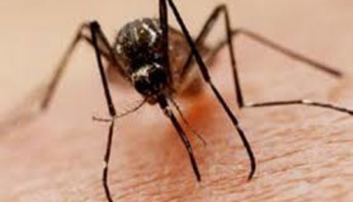 """The Pan American Health Organization PAHO is warning of what it describes as """"the complex situation"""" of dengue in Latin America and the Caribbean"""