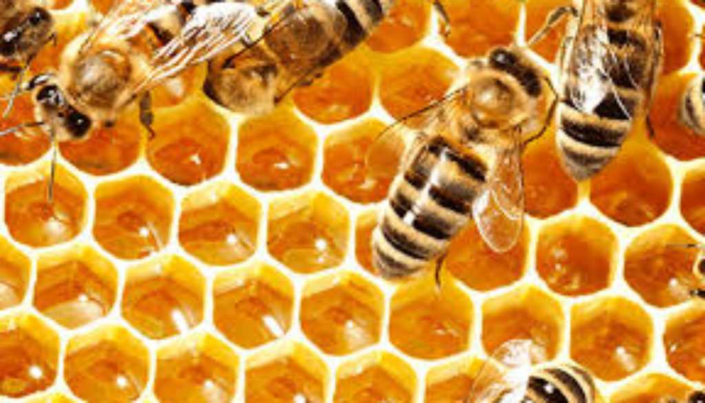 St-Lucia-to-revitalise-honey-industry.jpg