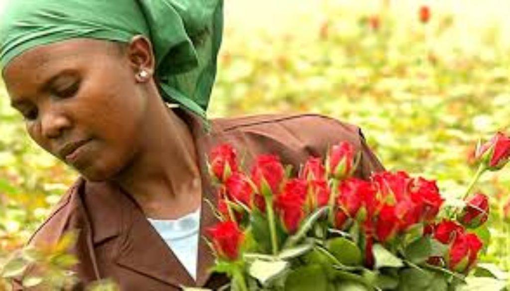 Brexit-effect-UK-looks-beyond-EU-to-Kenya-flower-farms.jpg