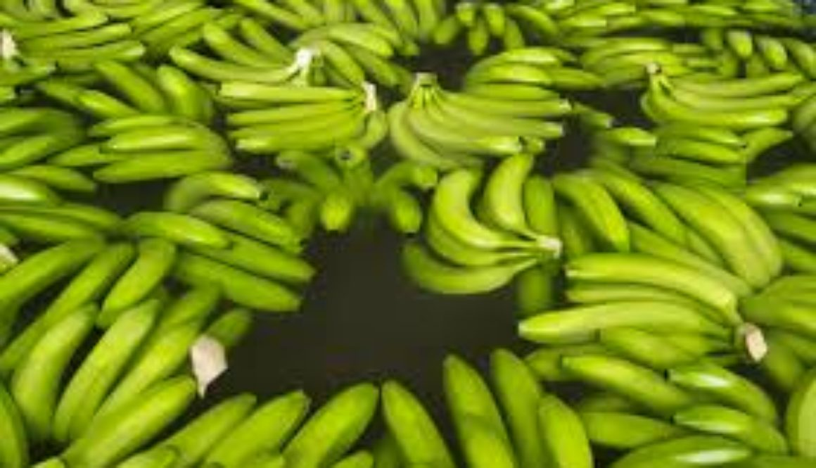 Jamaica-cuts-banana-and-plantain-crop-imports-due-to-deadly-threat.jpg