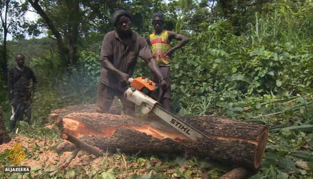 Sierra-Leone-resumes-timber-exports-worrying-environmentalists.jpg